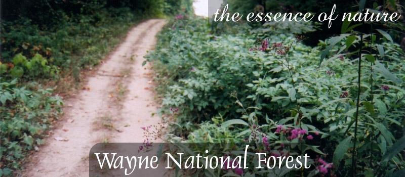 Wayne National Forest: Still NotSafe