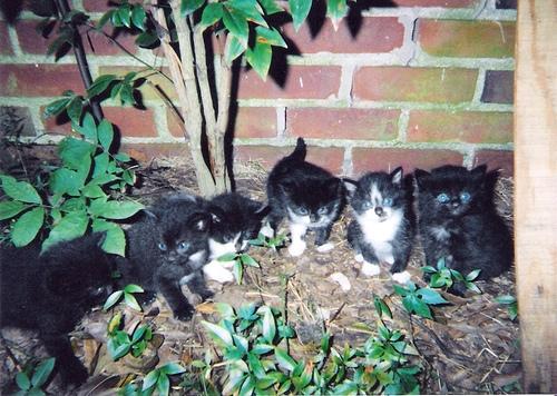 group of kittens like mine