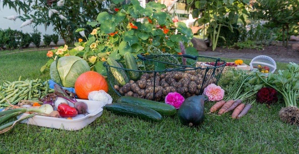 A Multi-Fold Harvest